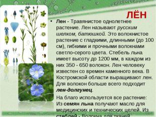 ЛЁН Лен - Травянистое однолетнее растение. Лен называют русским шелком, батюш