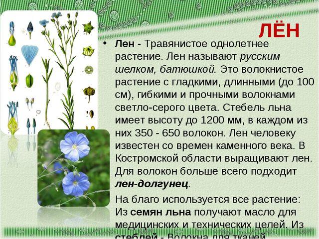 ЛЁН Лен - Травянистое однолетнее растение. Лен называют русским шелком, батюш...