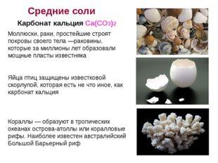 Моллюски, раки, простейшие строят покровы своего тела —раковины, которые за м