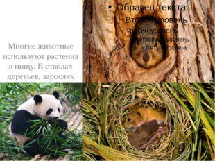 Многие животные используют растения в пищу. В стволах деревьев, зарослях кус