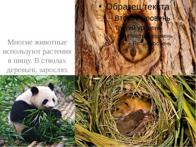 Многие животные используют растения в пищу. В стволах деревьев, зарослях кус...