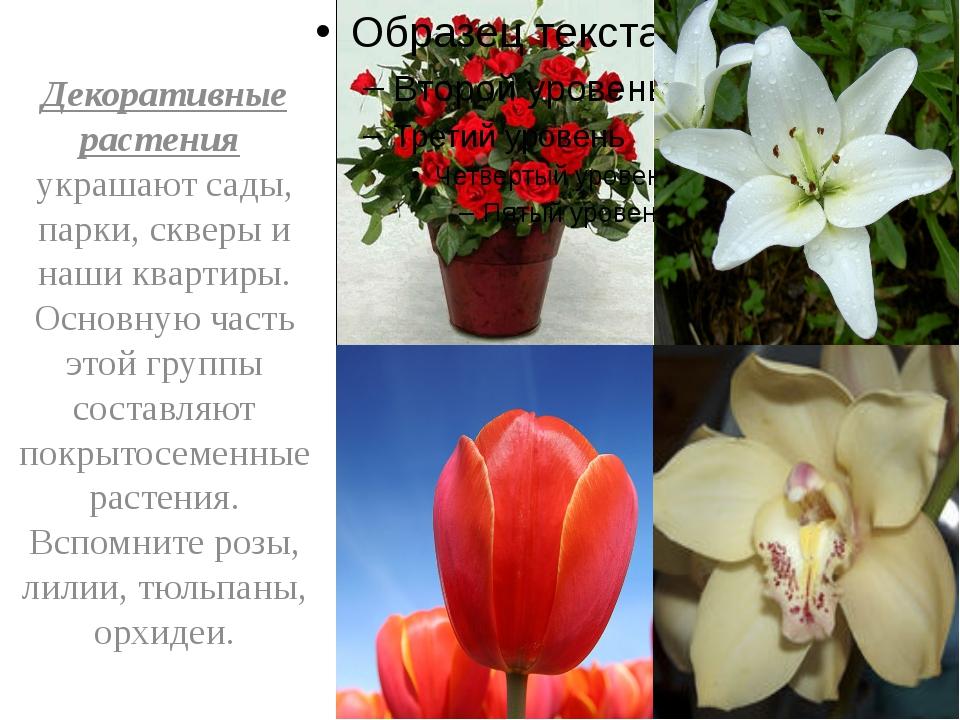 Декоративные растения украшают сады, парки, скверы и наши квартиры. Основную...