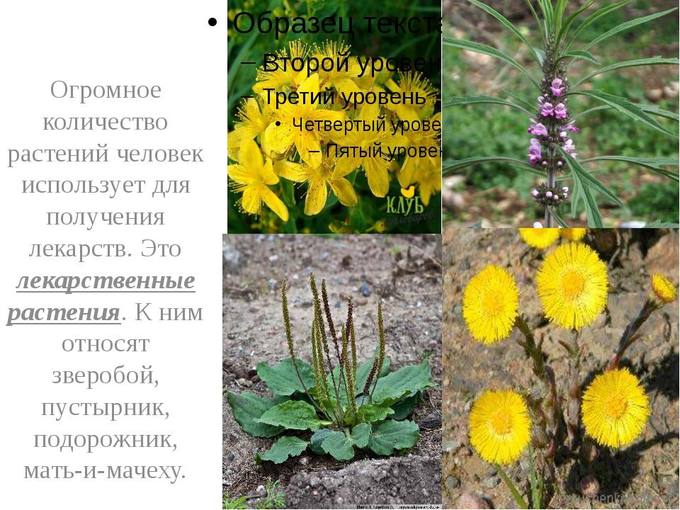 Огромное количество растений человек использует для получения лекарств. Это...