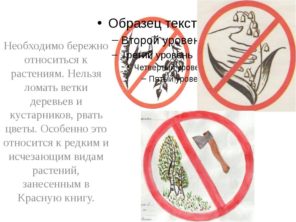 Необходимо бережно относиться к растениям. Нельзя ломать ветки деревьев и ку...