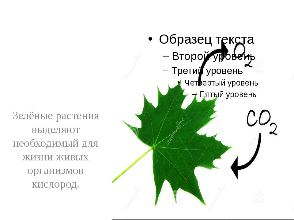 Зелёные растения выделяют необходимый для жизни живых организмов кислород.
