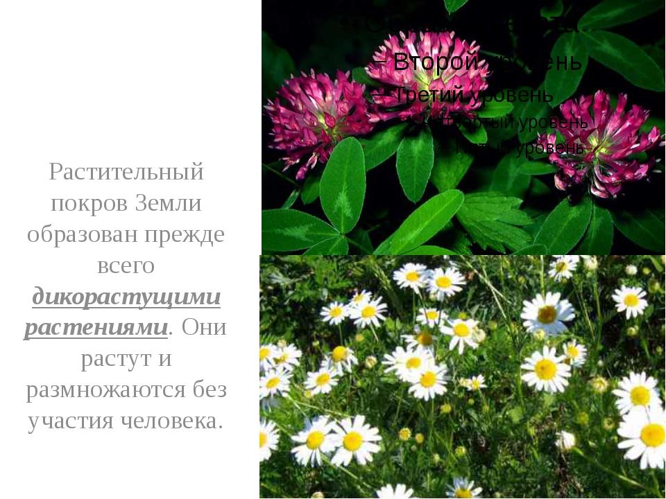 Растительный покров Земли образован прежде всего дикорастущими растениями. О...