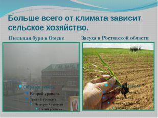 Больше всего от климата зависит сельское хозяйство. Пыльная буря в Омске Засу