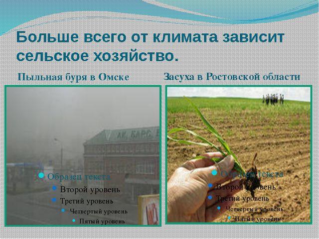 Больше всего от климата зависит сельское хозяйство. Пыльная буря в Омске Засу...