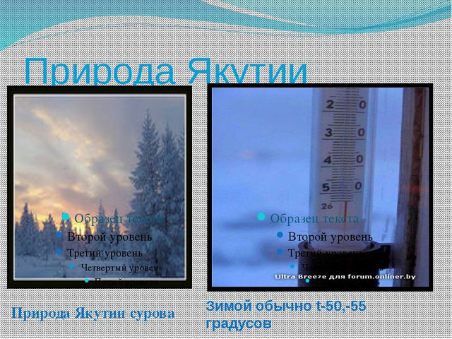 Природа Якутии Природа Якутии сурова Зимой обычно t-50,-55 градусов
