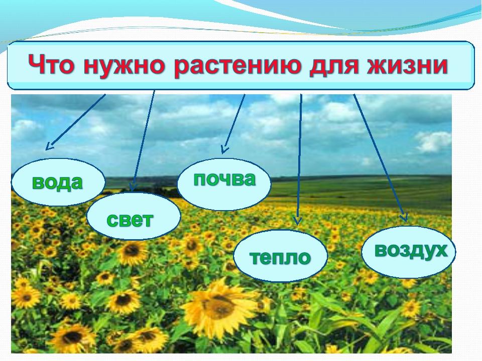 Почему для высших растений необходимо присутствие в почве