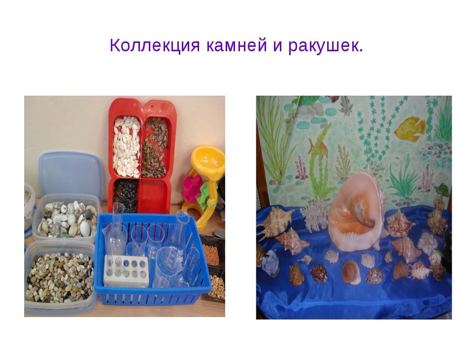 Коллекция камней и ракушек.