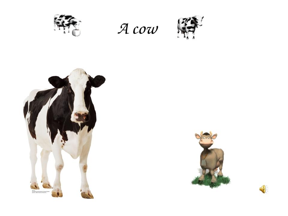 A cow