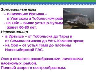 Зимовальные ямы – в низовьях Иртыша – в Уватском и Тобольском районах, - на О