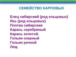 СЕМЕЙСТВО КАРПОВЫХ Елец сибирский (род ельцовых) Язь (род ельцовых) Плотва с