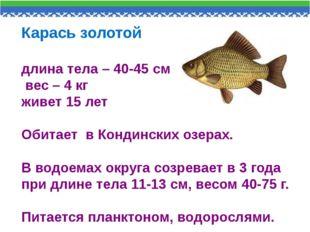 Карась золотой длина тела – 40-45 см вес – 4 кг живет 15 лет Обитает в Кондин
