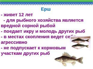 Ерш - живет 12 лет - для рыбного хозяйства является вредной сорной рыбой - по