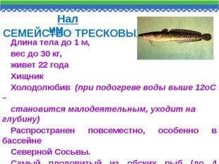 Длина тела до 1 м, вес до 30 кг, живет 22 года Хищник Холодолюбив (при подогр