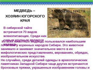 МЕДВЕДЬ – ХОЗЯИН ЮГОРСКОГО КРАЯ В сибирской тайге встречается 70 видов млеко