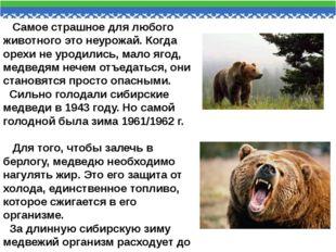 Самое страшное для любого животного это неурожай. Когда орехи не уродились,