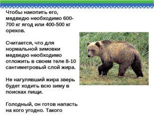 Чтобы накопить его, медведю необходимо 600-700 кг ягод или 400-500 кг орехов.