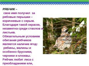 РЯБЧИК – свое имя получил за рябовые перышки – коричневые с серым. Благодаря