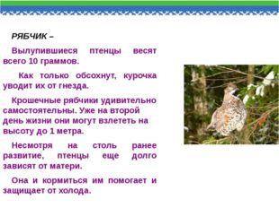 РЯБЧИК – Вылупившиеся птенцы весят всего 10 граммов. Как только обсохнут, ку