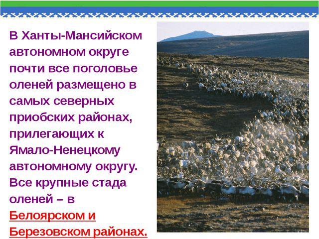 В Ханты-Мансийском автономном округе почти все поголовье оленей размещено в с...