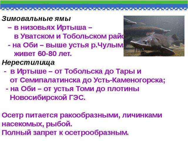 Зимовальные ямы – в низовьях Иртыша – в Уватском и Тобольском районах, - на О...