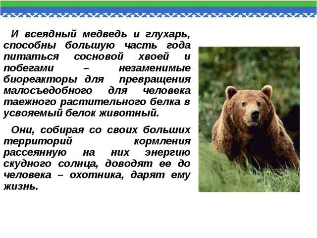 И всеядный медведь и глухарь, способны большую часть года питаться сосновой х...
