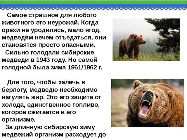 Самое страшное для любого животного это неурожай. Когда орехи не уродились,...