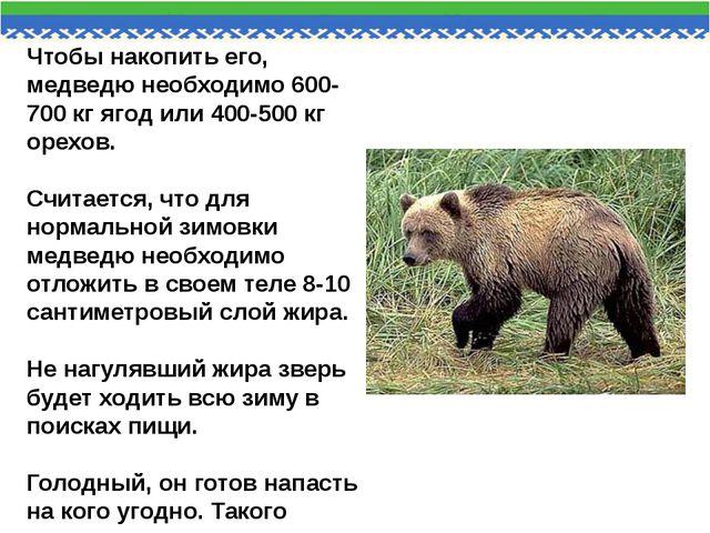 Чтобы накопить его, медведю необходимо 600-700 кг ягод или 400-500 кг орехов....