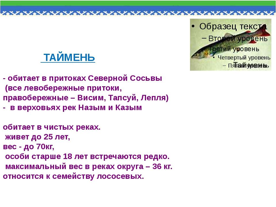 ТАЙМЕНЬ - обитает в притоках Северной Сосьвы (все левобережные притоки, прав...