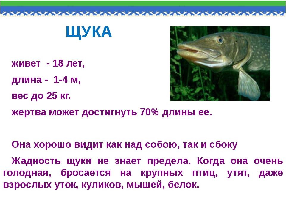 ЩУКА живет - 18 лет, длина - 1-4 м, вес до 25 кг. жертва может достигнуть 70%...