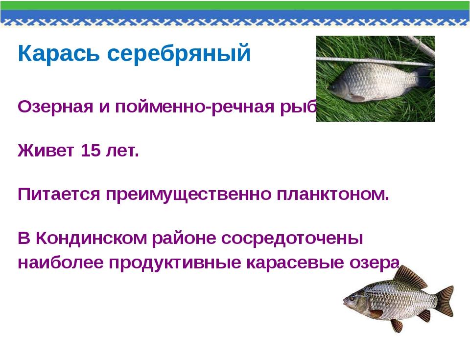 Карась серебряный Озерная и пойменно-речная рыба. Живет 15 лет. Питается преи...