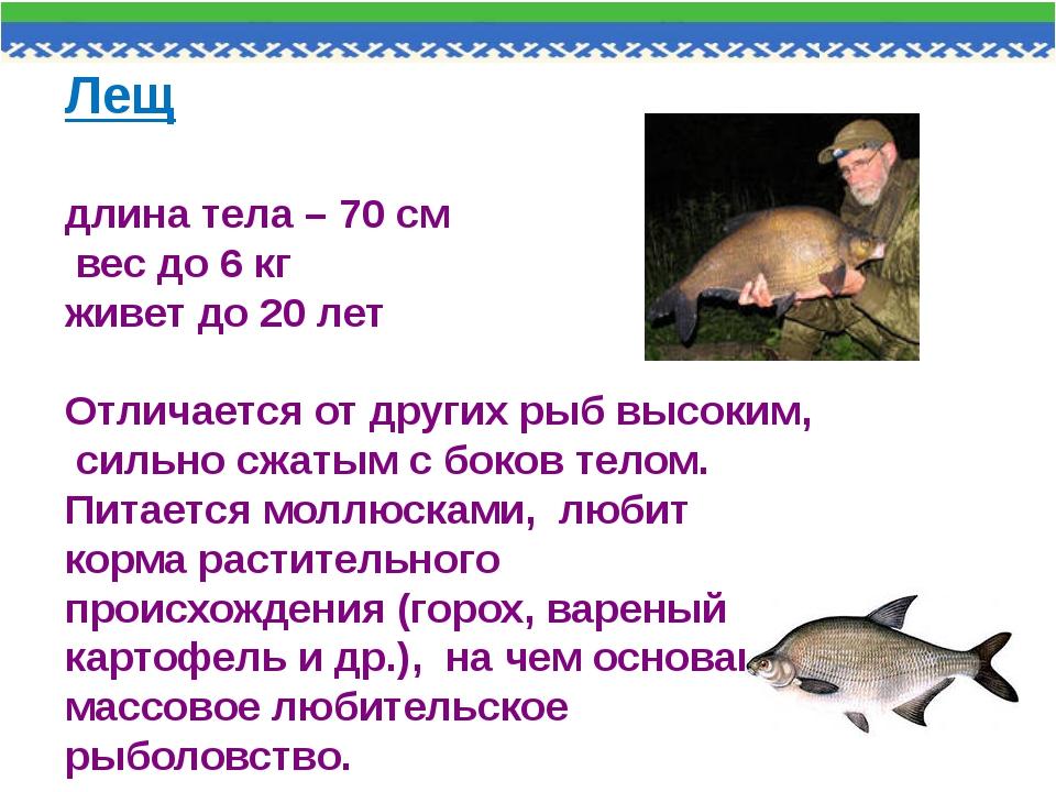 Лещ длина тела – 70 см вес до 6 кг живет до 20 лет Отличается от других рыб в...