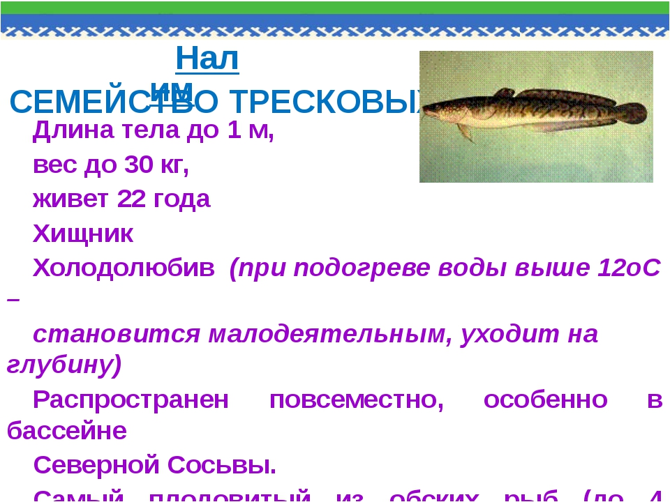 Длина тела до 1 м, вес до 30 кг, живет 22 года Хищник Холодолюбив (при подогр...