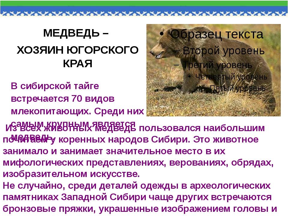 МЕДВЕДЬ – ХОЗЯИН ЮГОРСКОГО КРАЯ В сибирской тайге встречается 70 видов млеко...