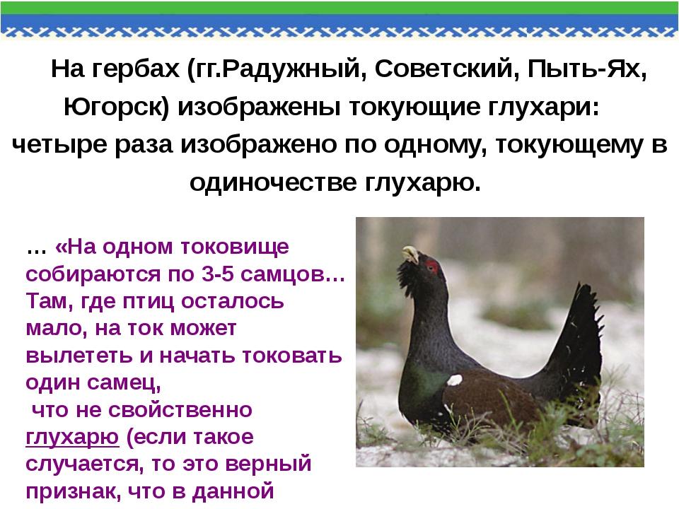 На гербах (гг.Радужный, Советский, Пыть-Ях, Югорск) изображены токующие глуха...