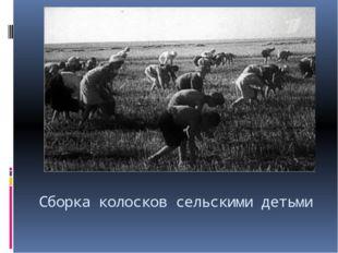 Сборка колосков сельскими детьми