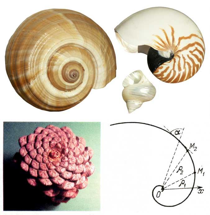 http://myrt.ru/zharov/logarifmicheskaja_spiralx.jpg