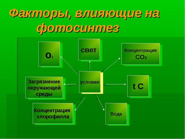 Факторы, влияющие на фотосинтез