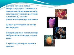 По типу питания губки – биофильтраторы. Питаются в основном взвешенными в вод