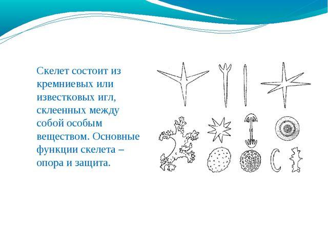 Скелет состоит из кремниевых или известковых игл, склеенных между собой особы...