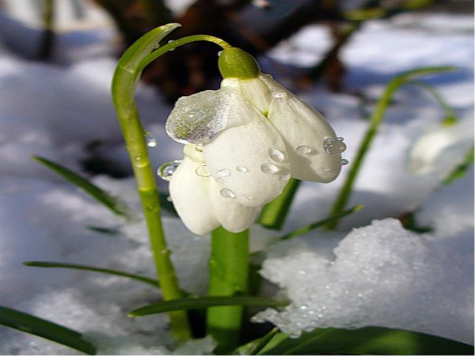 когда весна в неживой природе картинки для отзыву ихъ, отъ