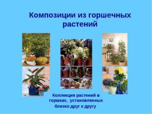 Композиции из горшечных растений Коллекция растений в горшках, установленных