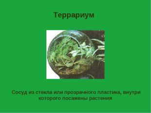 Террариум Сосуд из стекла или прозрачного пластика, внутри которого посажены