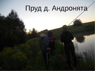 Пруд д. Андронята