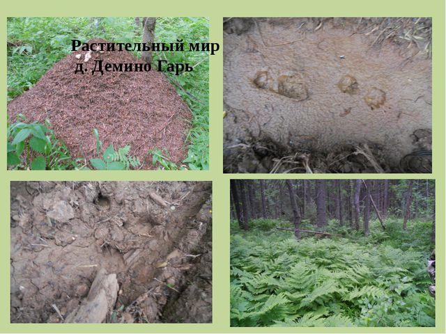 Растительный мир д. Демино Гарь
