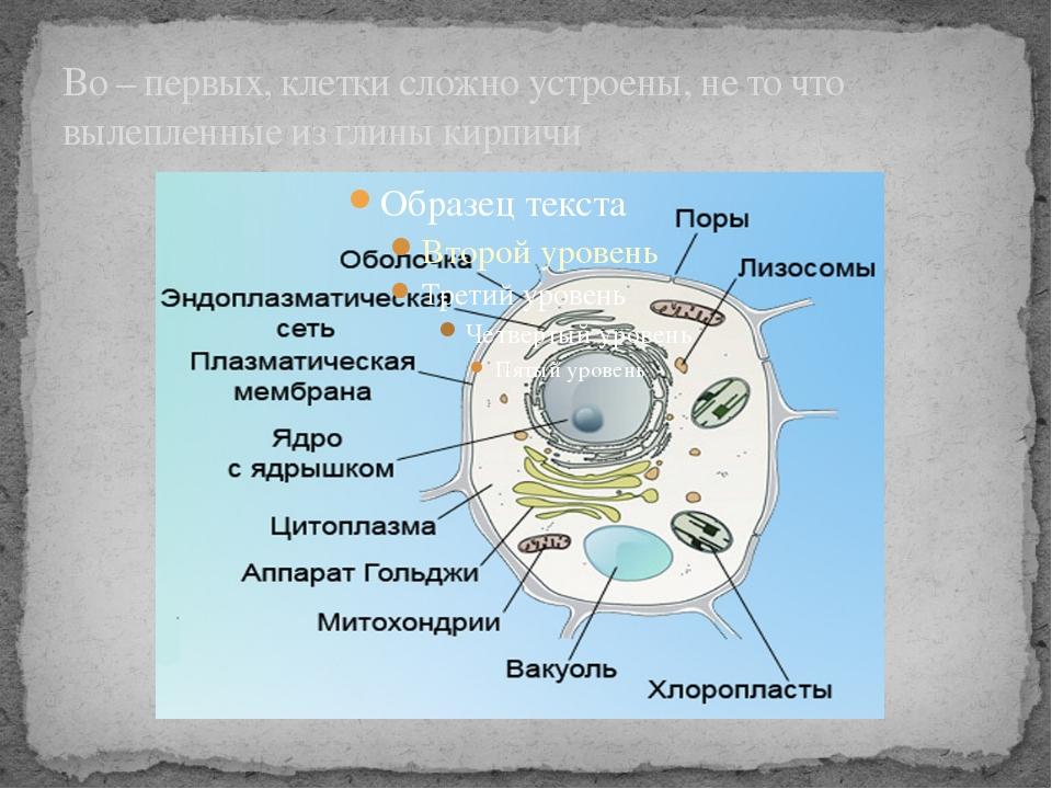 Во – первых, клетки сложно устроены, не то что вылепленные из глины кирпичи