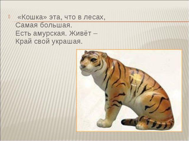 «Кошка» эта, что в лесах, Самая большая. Есть амурская. Живёт – Край свой ук...